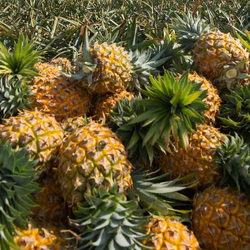 菠萝营养方案